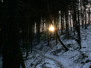 Sunrise snow forest